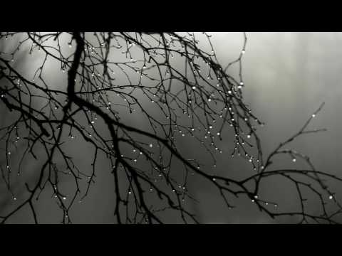 Rain & Deep Thunder Nature Sounds for Relax, Study, Sleep