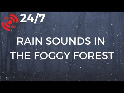 Rain & Fog in the Forest | Relaxing Sleep Sounds for Stress Relief, Insomnia Symptoms & Anxiety