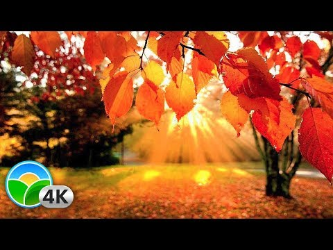 4K Autumn Forest & Relaxing Piano Music – Beautifull Fall Leaf Colors in 4K UHD – 2 Hours