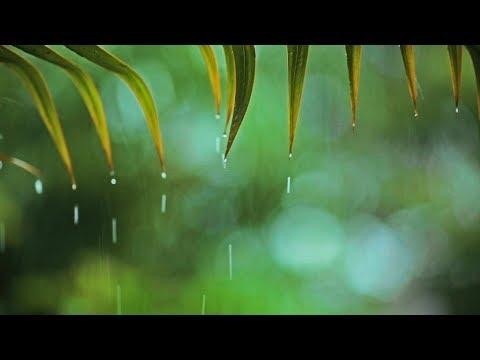 Relaxing Music & Rain Sounds – Beautiful Piano Music, Background Music, Sleep Music
