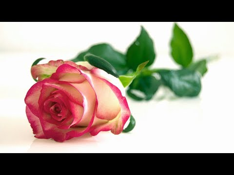 Romantic Music – Relaxing Music, Peaceful Music, Stress Relief (Tiffany)
