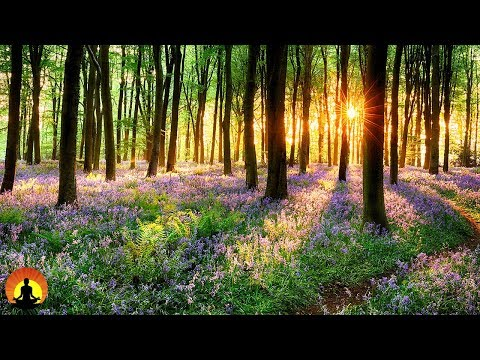 Zen Music, Relaxing Music, Calming Music, Stress Relief Music, Peaceful Music, Relax, ☯3497