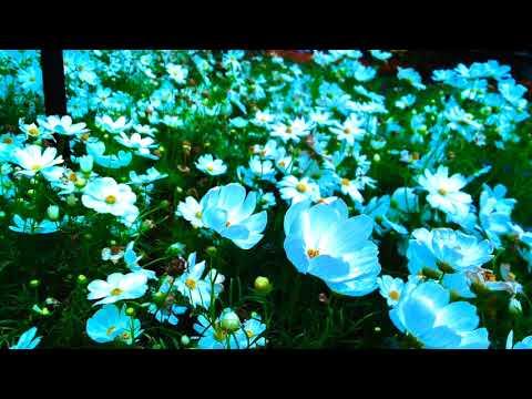 Deep Sleep♡ Healing music Piano Stress relief Relaxing music Sleeping Calming Lullaby Soothing music