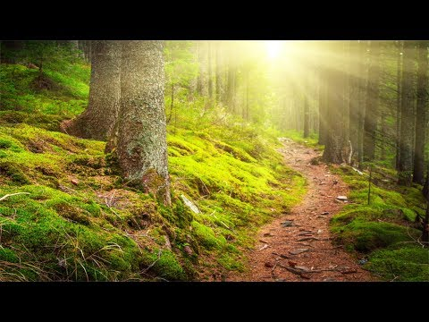 Relaxing Music, Beautiful Nature, Soothing Music for Meditation, Yoga, Stress Relief