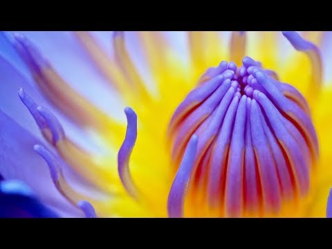 Relaxing Live Reiki Healing Music 24/7: Meditation Music, Soothing Music, Relaxation Music